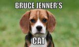 bruce_jenners_cat.jpg.ce9f6671660bfeff507033da4fbae1c8